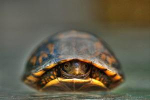 8-hiding-turtle